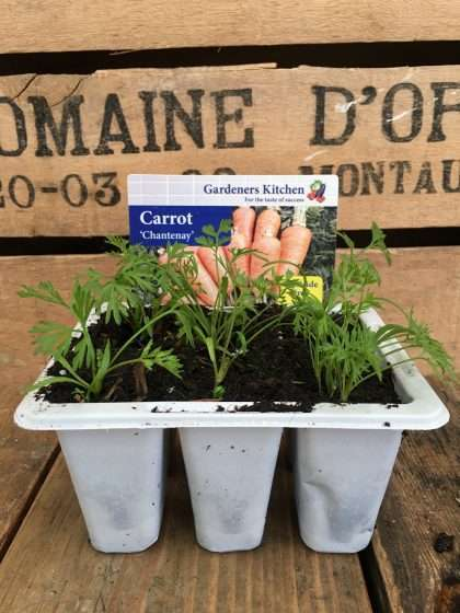 Carrot Chantenay Plants